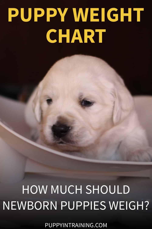 Puppy Weight Chart How Much Weight Should A Newborn