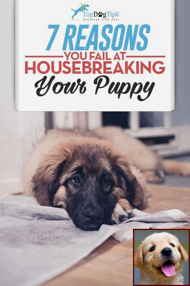 how long does it take to potty train a rescue dog