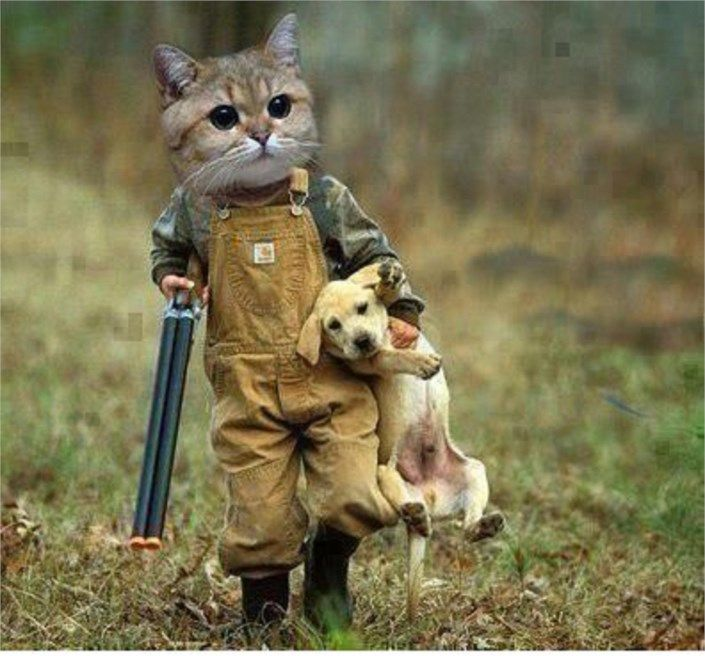 Funny Cat As A Hunter Carrying His Cute Dog Funny Animal Memes Funny Cat Videos Funny Animal Pictures
