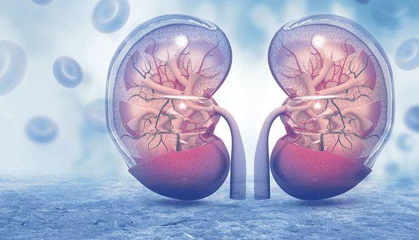 Kidney Functioning  https://goo.gl/xNi63Z