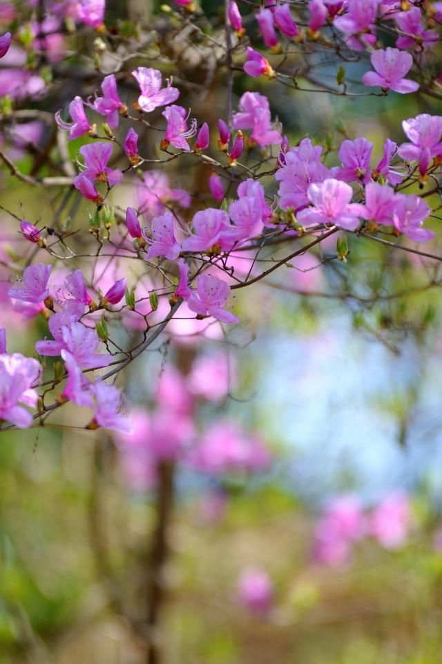 Delightful Spring Printemps Fleurs I Jardins
