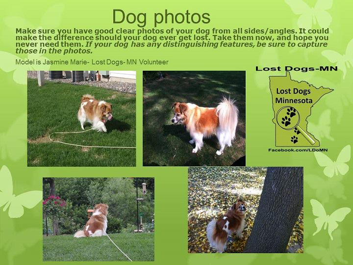 Be Sure To Keep Lots Of Clear Photos Of Your Dog Handy Take Them