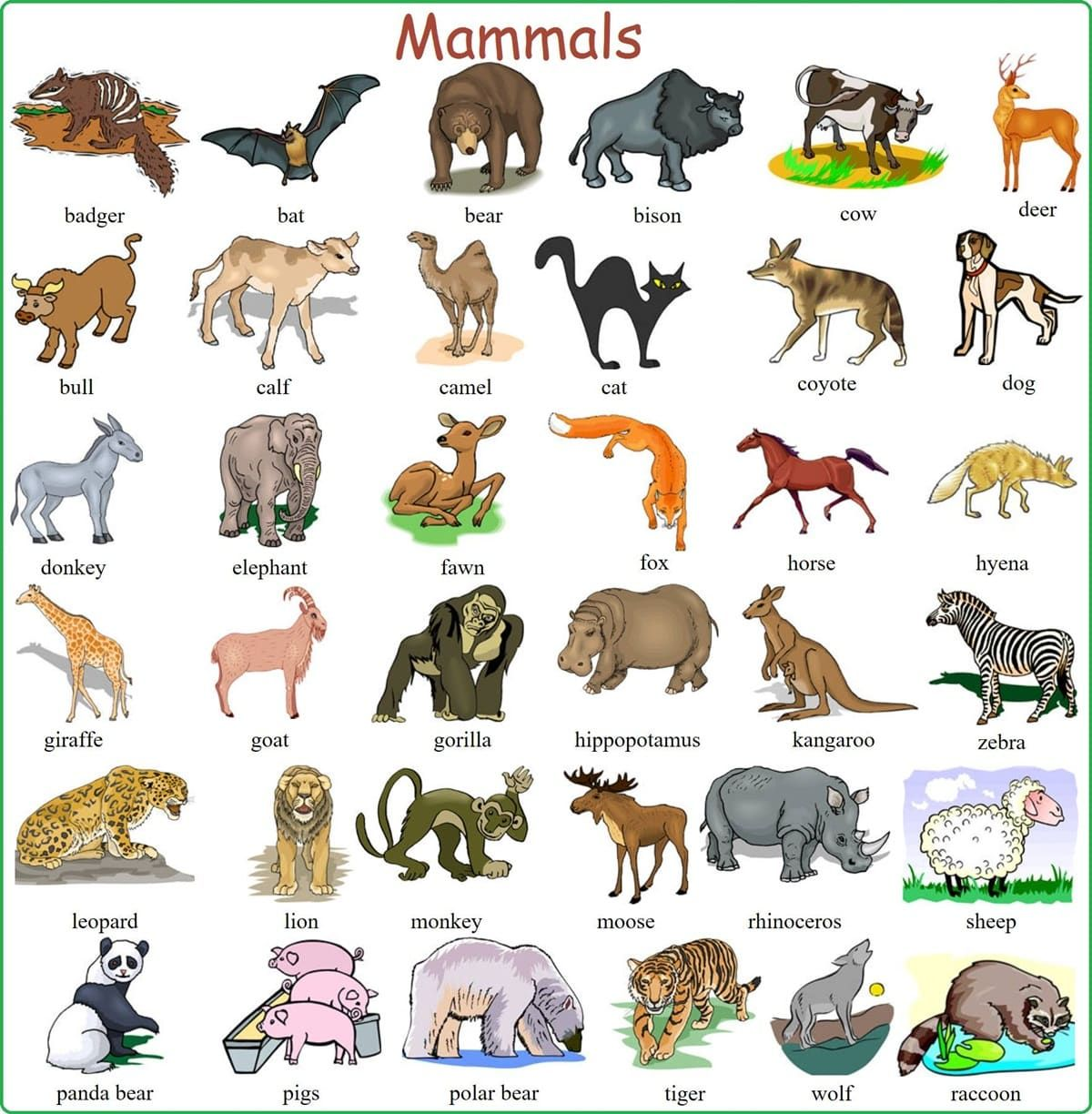 Learn English Vocabulary Through Pictures 100 Animal Names English Vocabulary Learn English Vocabulary Animals Name In English