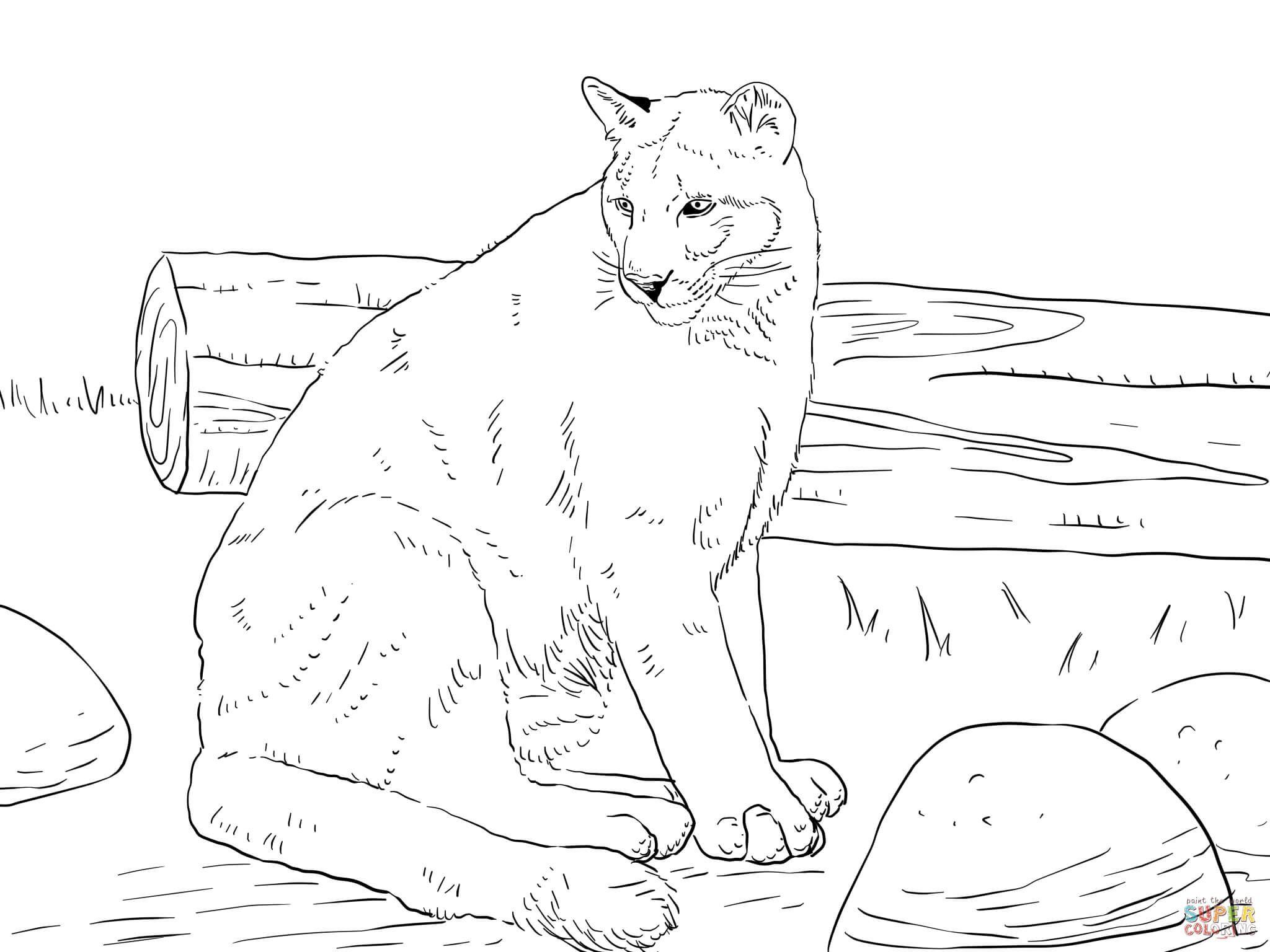 44 Imposing Cougar Coloring Pages — Conexionunder