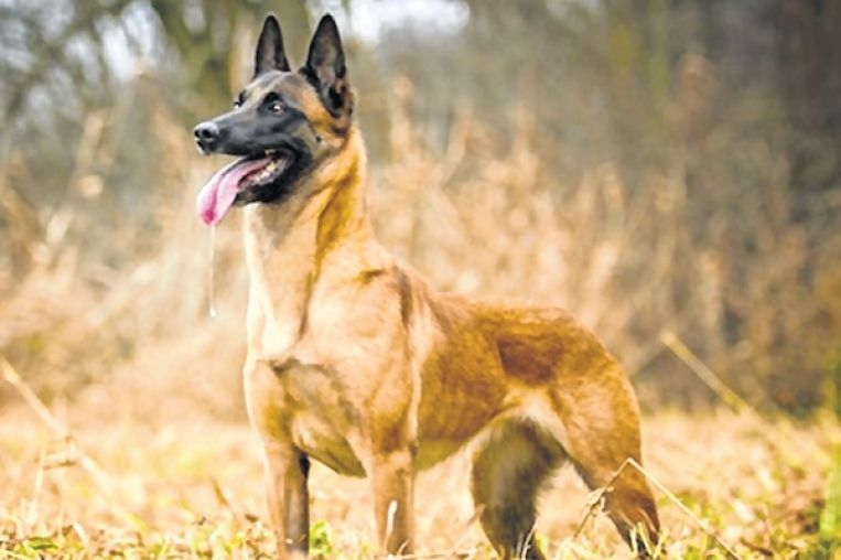 The Most Expensive Dog In Cisf S Dog Squad Expensive Dogs Most Expensive Dog Dogs