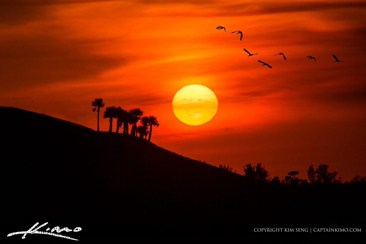Http Captainkimo Com Birds Flying Into The Sunset Over