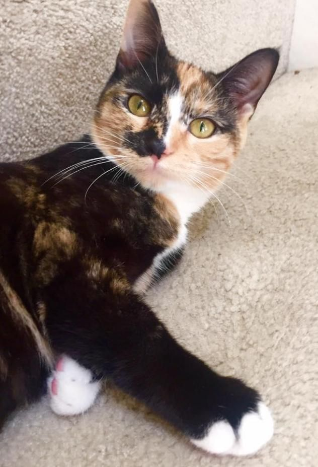 Adopt Goldie On Animal Help Animals Animal Rescue