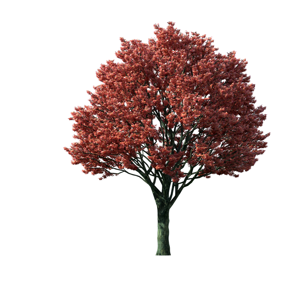 Tree-Clipart-Flaming-Autumn-Maple-Tree.png (1024×1024 ...