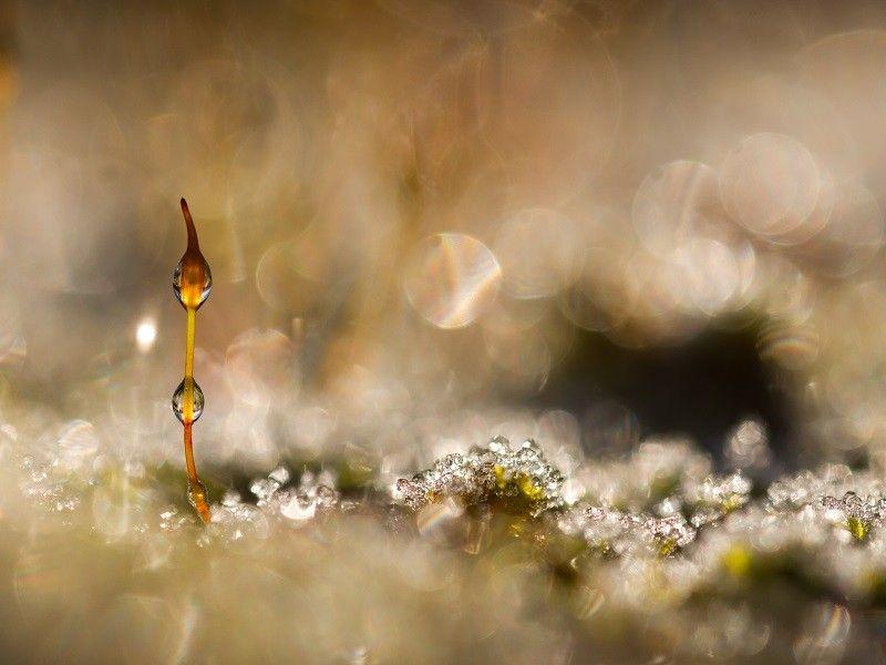 Au pays des fées | Macro | Pinterest