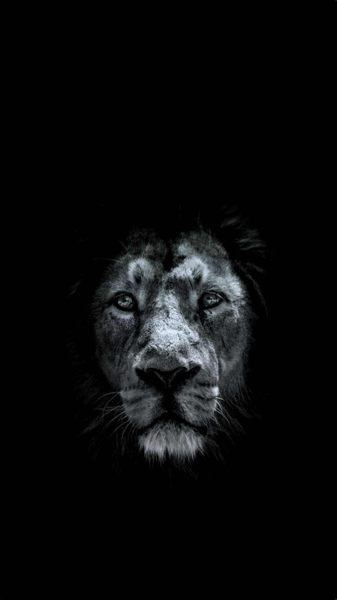 Black Lion Wallpapers Images Hupages Download Iphone Wallpapers Lion Hd Wallpaper Lion Wallpaper Iphone Lion Wallpaper