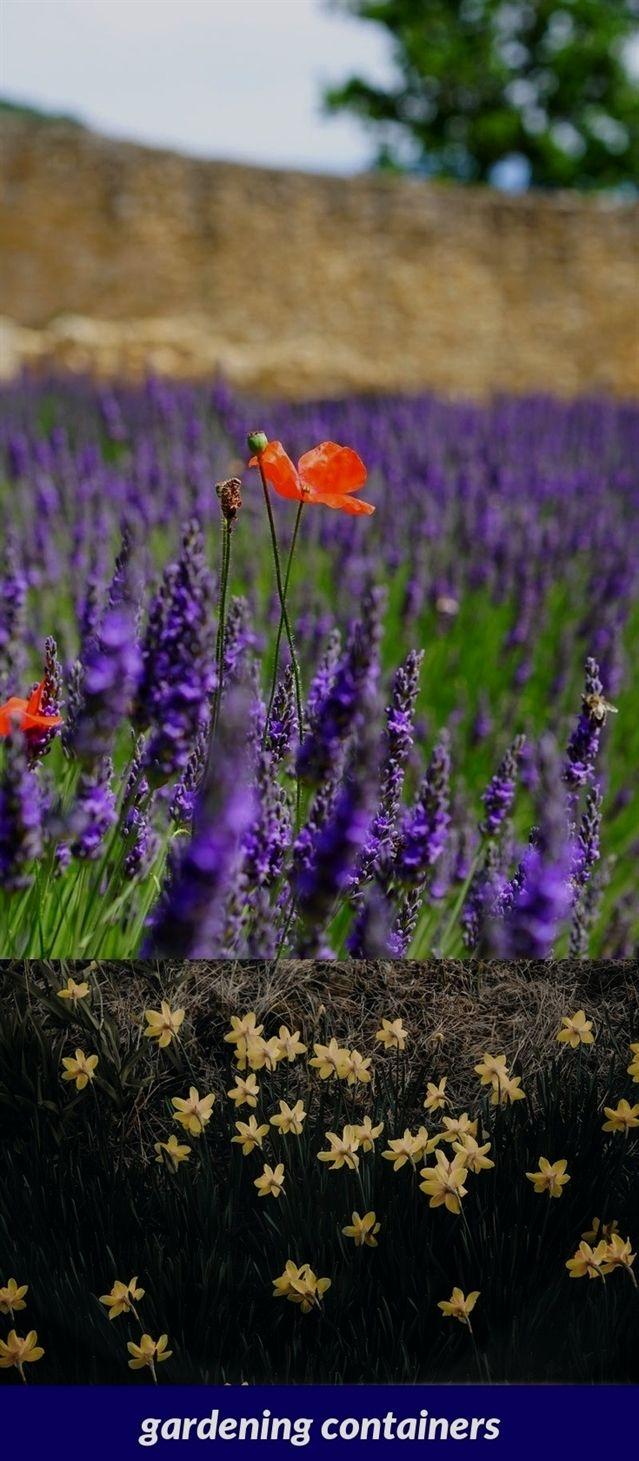 Amazing Advice For A Thriving Organic Garden Organic
