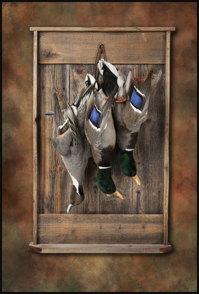 Dead Mounts Taxidermy Texas Hunting Forum Waterfowl