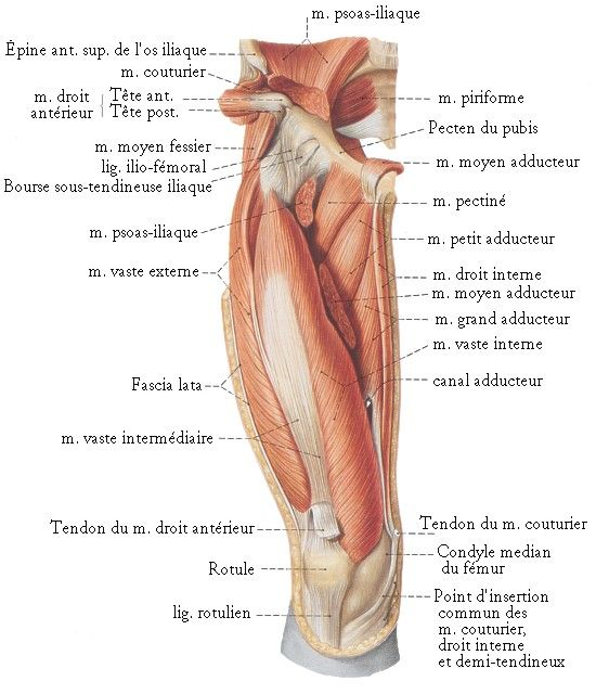 Pin by milan mehta on Muscles   Pinterest   Muscles