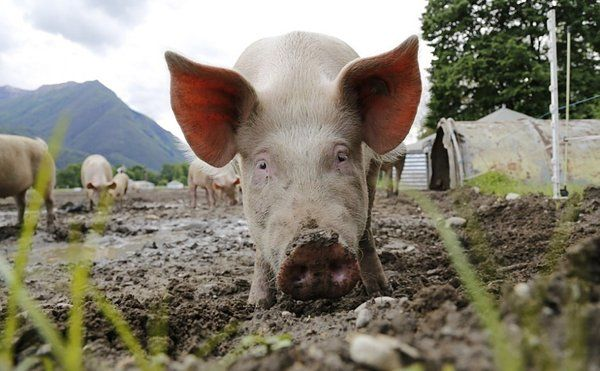 the three little pigs on hybrid cloud security new research http