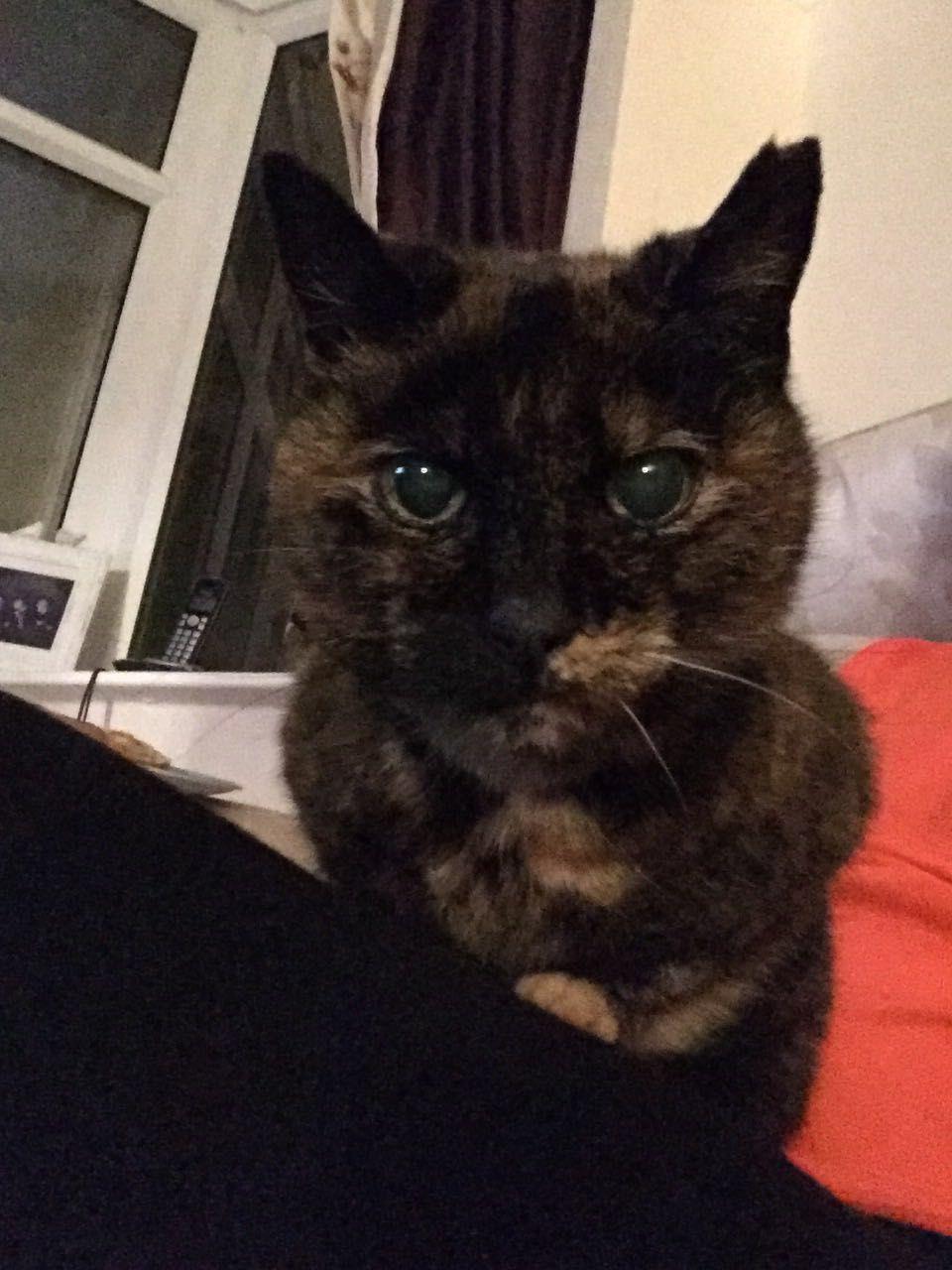 Hallie Cats, Animals, Cuddling