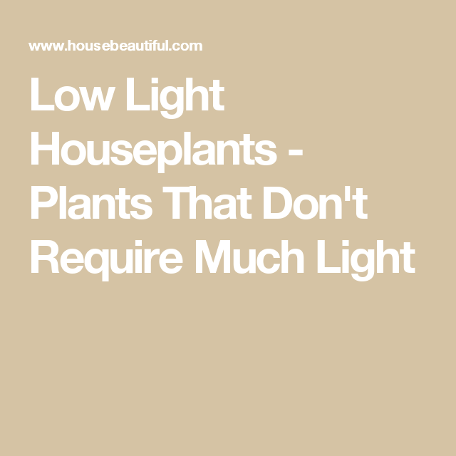 Low Light Houseplants - Plants That Donu0027t Require Much Light-including Lucky Bamboo  sc 1 st  Pinterest & 10 Houseplants That Can Survive in Even the Darkest Corner | Low ... azcodes.com