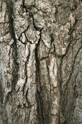 How To Paint Faux Tree Bark Ehow Faux Tree Tree Painting Tree Bark Texture