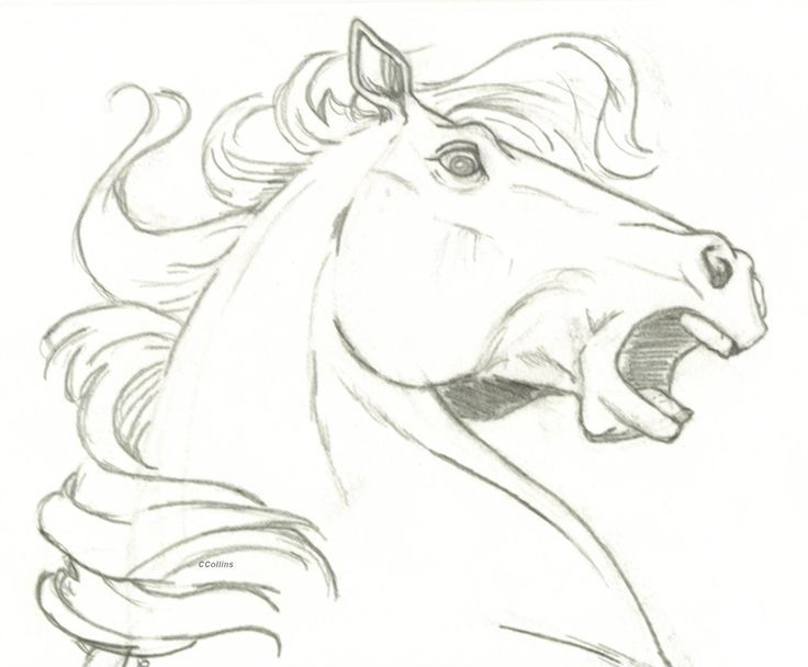 Horse head surprise by traditional art drawings animals 2005