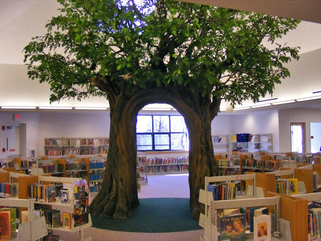 Wallingford Public Library Ct Another Great Indoor Tree