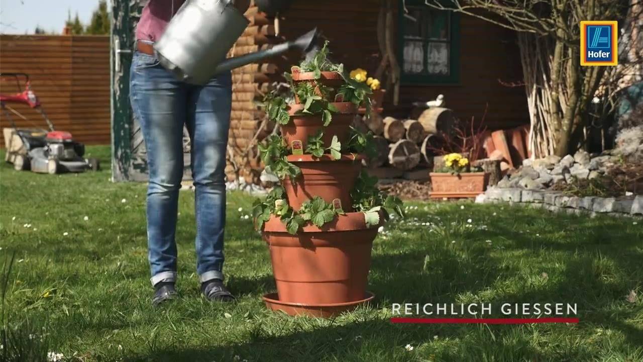 Erdbeeren anbauen auf kleinstem Raum. ;-)