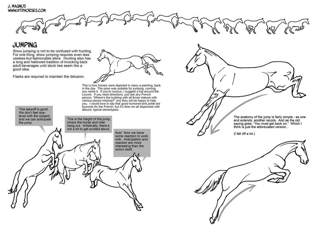 Jumping Horse Anatomy Diagram - House Wiring Diagram Symbols •