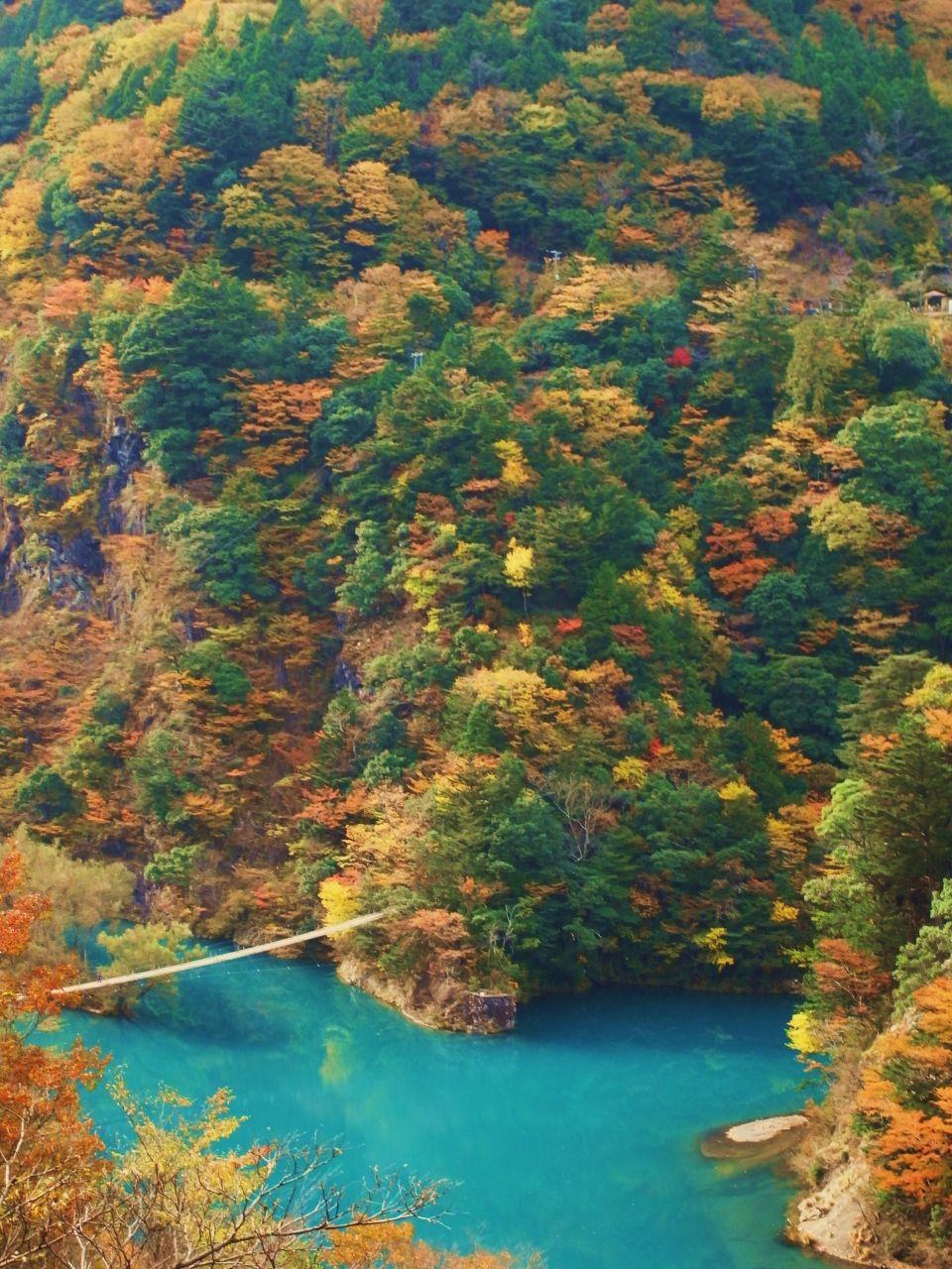 秋の紅葉巡り in 静岡【寸又峡&大井川アプト式鉄道】』 [寸又峡温泉 ... 静岡への日帰りバスツアーに参加しました。<br />今回