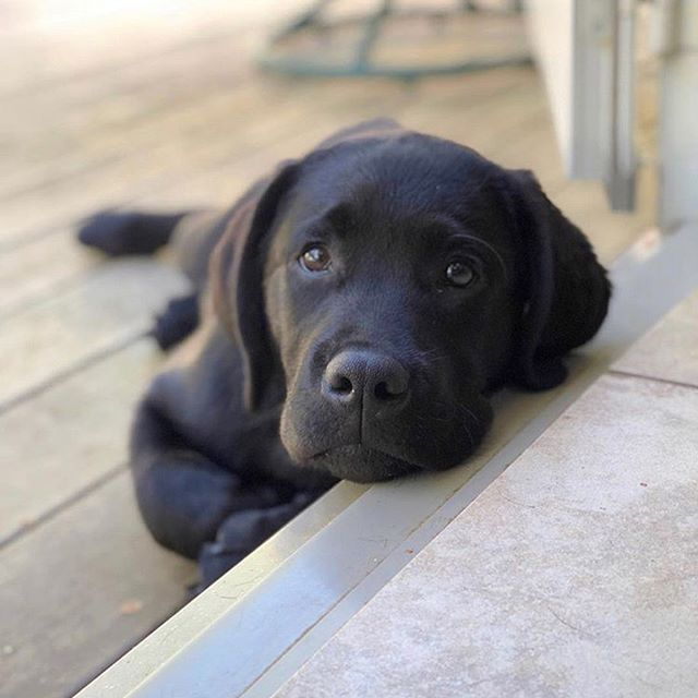 Image May Contain Dog Regram Via Radja Official Hundebabys Hunde Babys Hunde