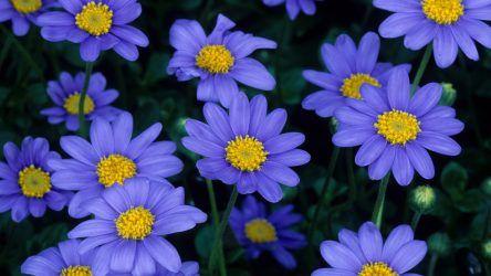 Каталог Цветов для Дачи (240+ Фото с Названиями ...
