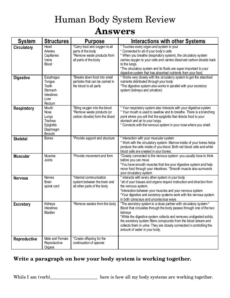 Human Body Systems Worksheet Karibunicollies Body Systems