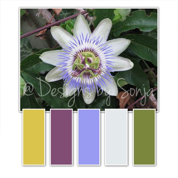 Passion Flower Colour Palette Colorful Flowers Passion Flower Color Palette
