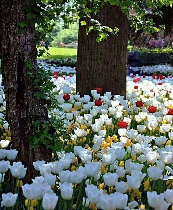 269 Likes, 3 Comments - Flowers & plants beautiful (@mohammadplant_samadpoor) on Instagram
