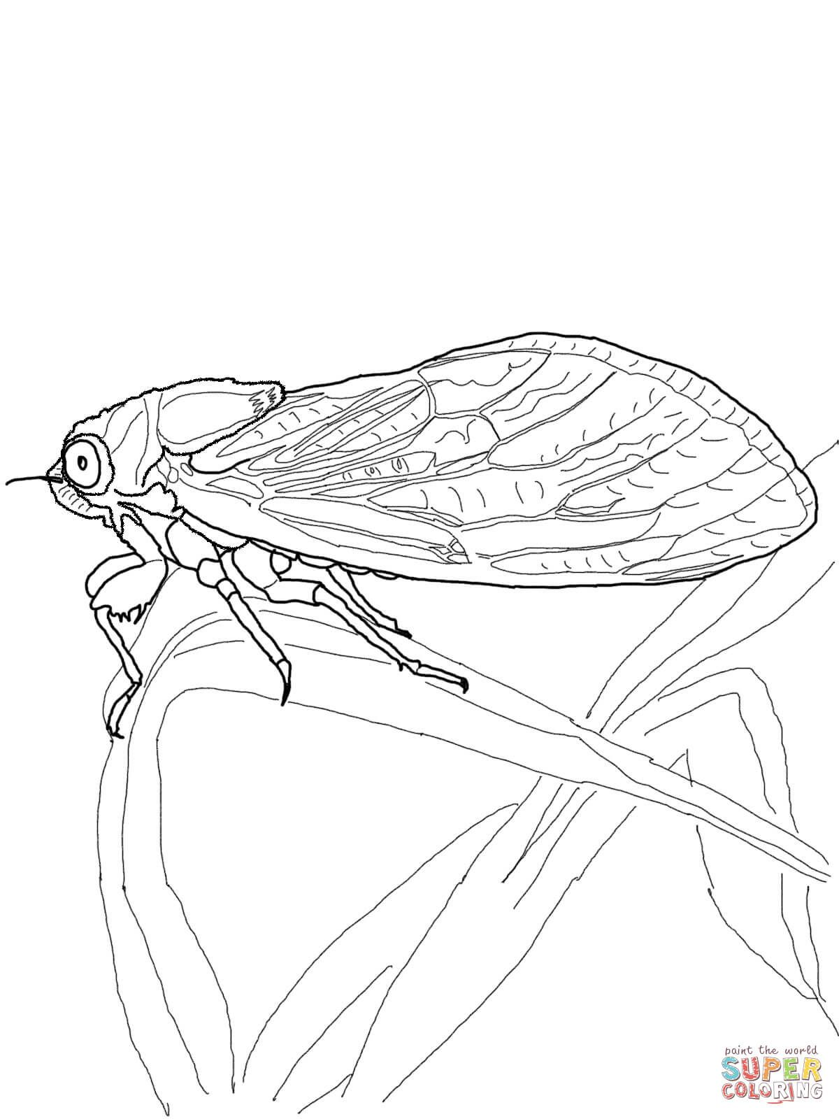 Cicada Super Coloring In 2020 Coloring Pages Free Printable Coloring Pages Printable Coloring Pages