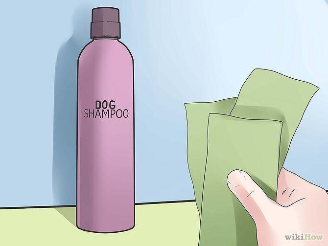 Make Your Dog Smell Better  Dog Smells, Your Dog, Smelly Dog-1503
