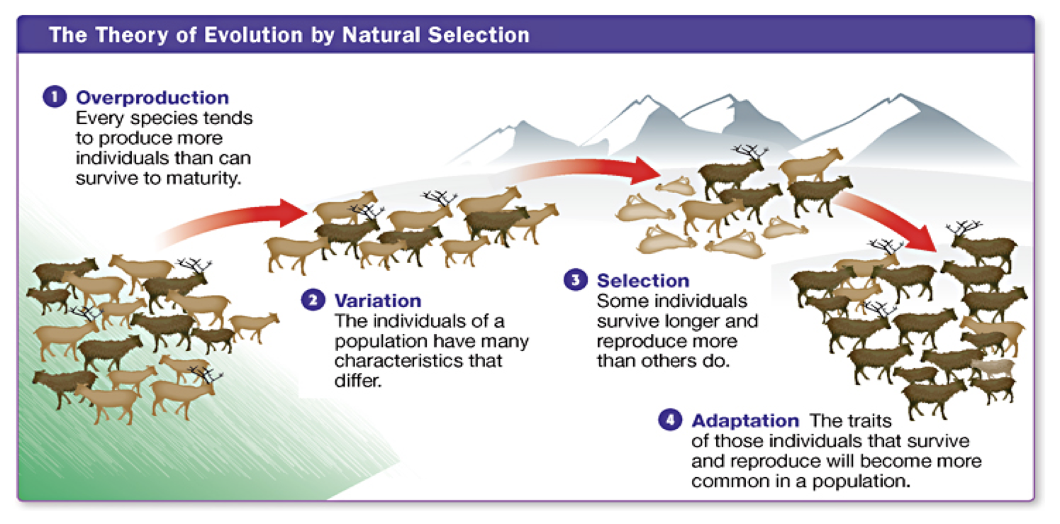 Explain Evolution Through Natural Selection