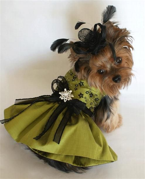 This Cutie Pie Reminds Me Of The Lady In The Movie Clue Fancy Dog Dog Clothes Patterns Pet Clothes