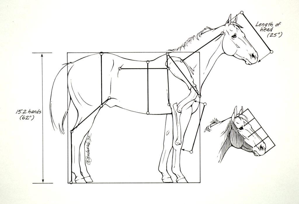 Horse Anatomy - Head Lengths | Лошадь скульптура ...