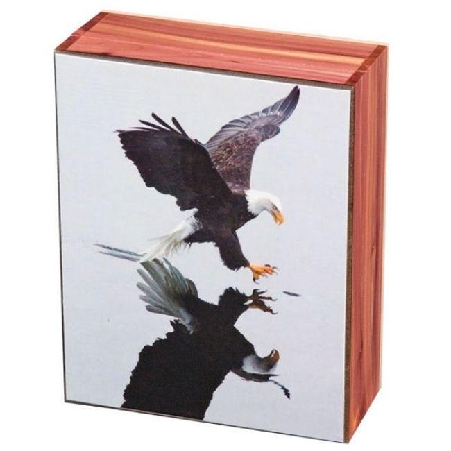 Eagle Reflection 5\