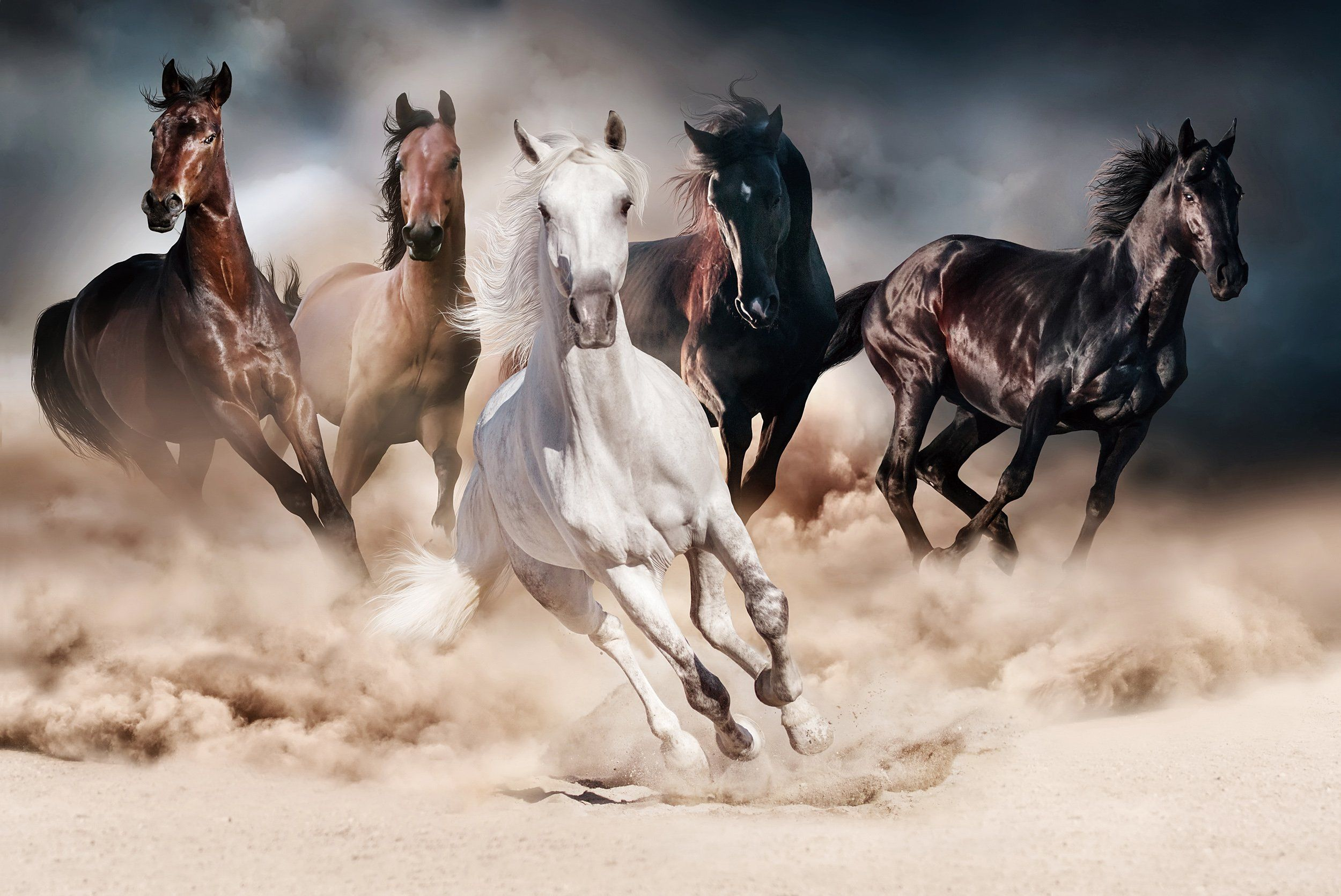 Multi Color Running Horses Print On Glass Wall Art In 2020 Horses Running Horses Horse Wallpaper