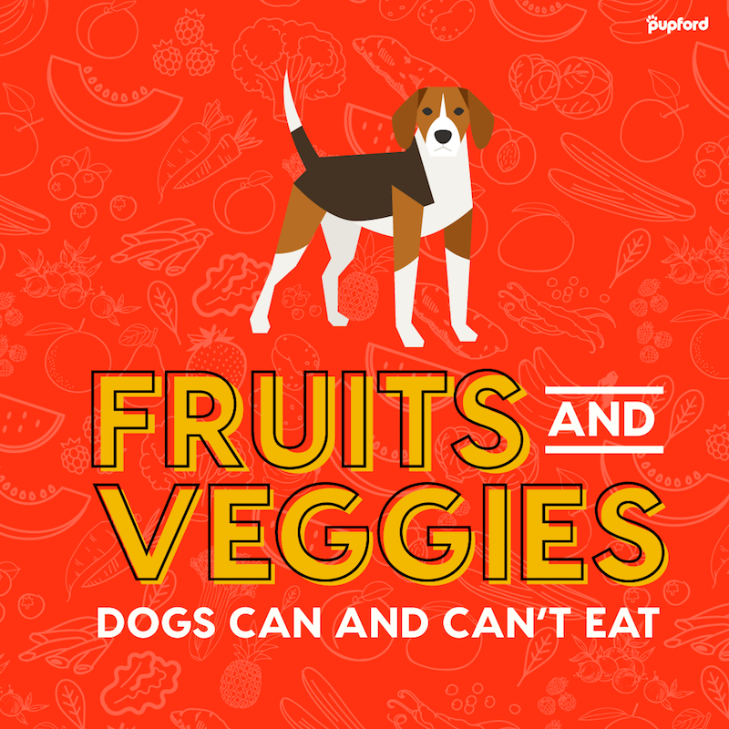 39 Vegetables and Fruits Dogs Can Eat and Can't Eat