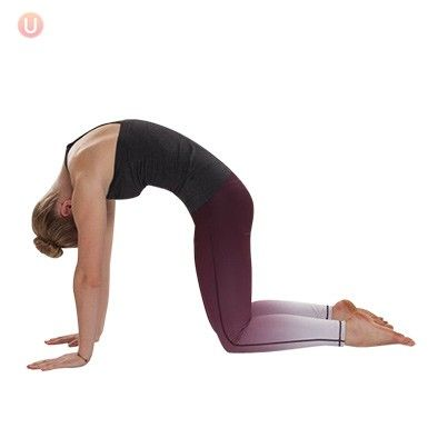 how to perform cat pose  get healthy u  basic yoga poses