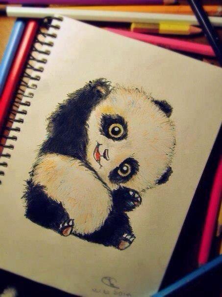Panda Bear Colored Pencil Art Cute Drawings Panda Drawing Art