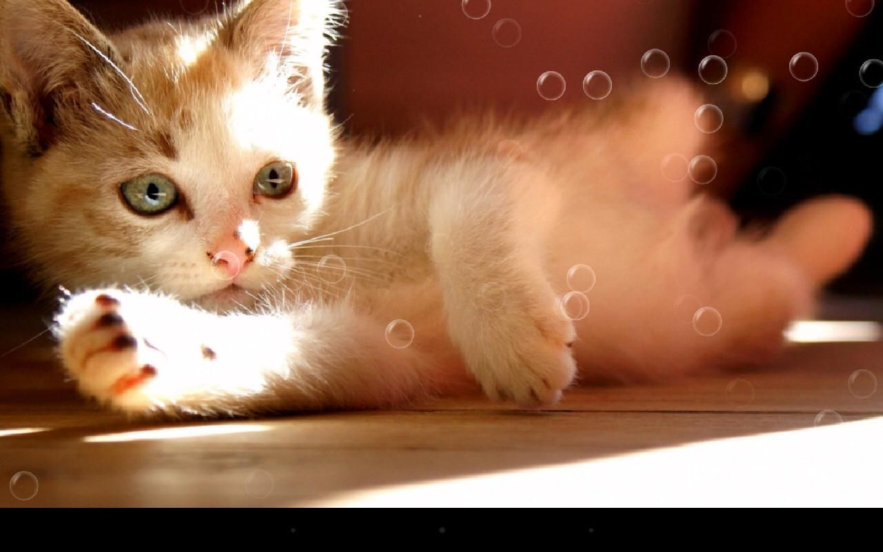 Lazy Cats Playing with bubbles Tags: #lazy #cats #animals #funny #cute