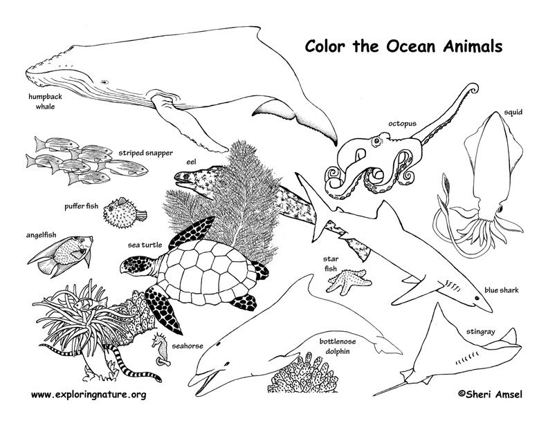 Learn About Ocean Animals On Exploringnature Org Animal Coloring Pages Ocean Coloring Pages Farm Animal Coloring Pages
