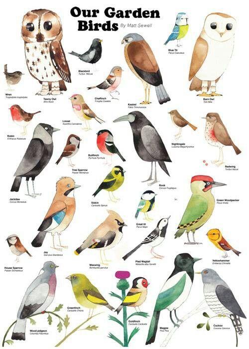 British Garden Birds Watercolor Painting Par Cathyeliot