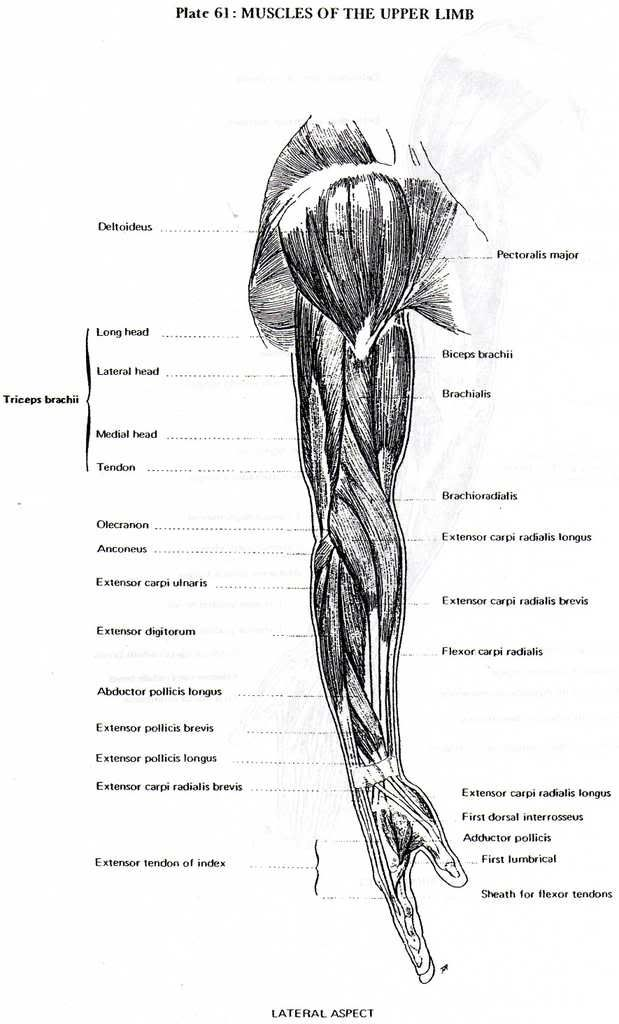 from the superb Artistic Anatomy, by Dr. Paul Richer | human anatomy ...