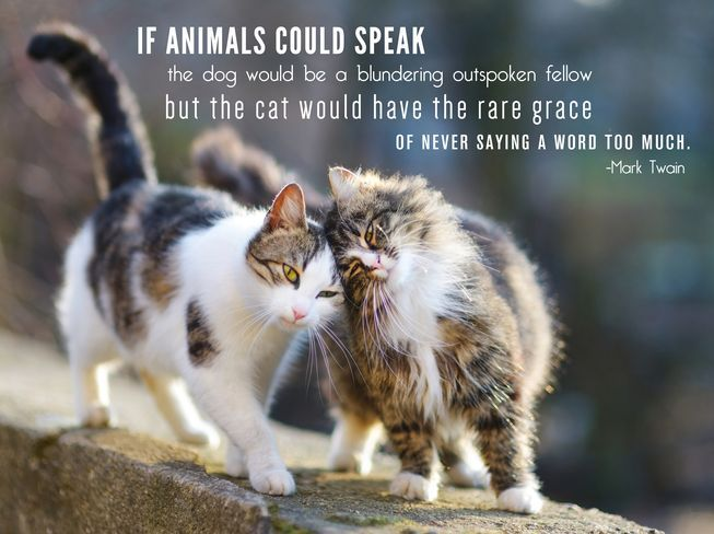 10 Quotes About Cats To Make Your Heart Purr Quotes Cat
