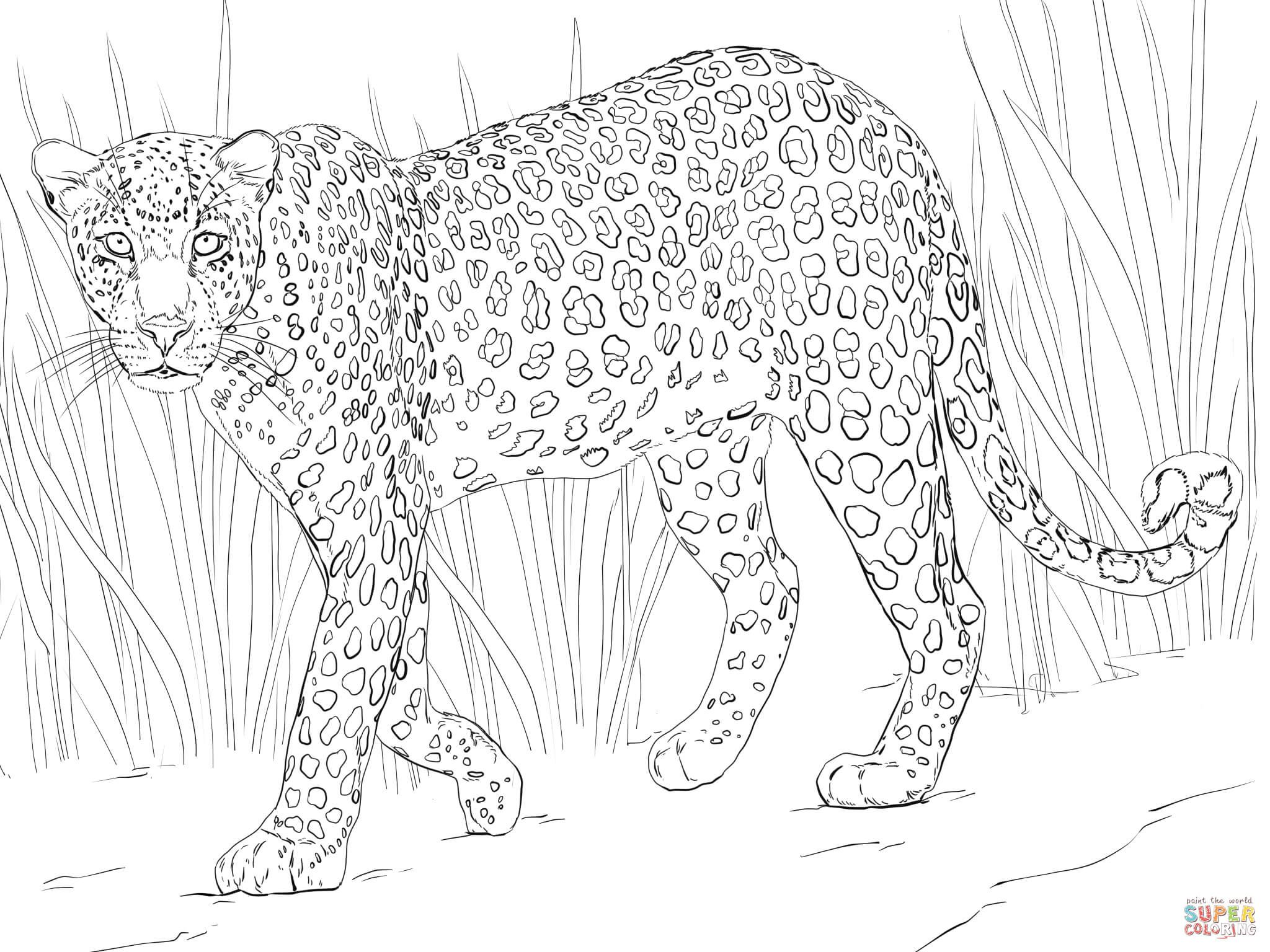 African Leopard African Leopard Animal Coloring Pages Colouring Pages