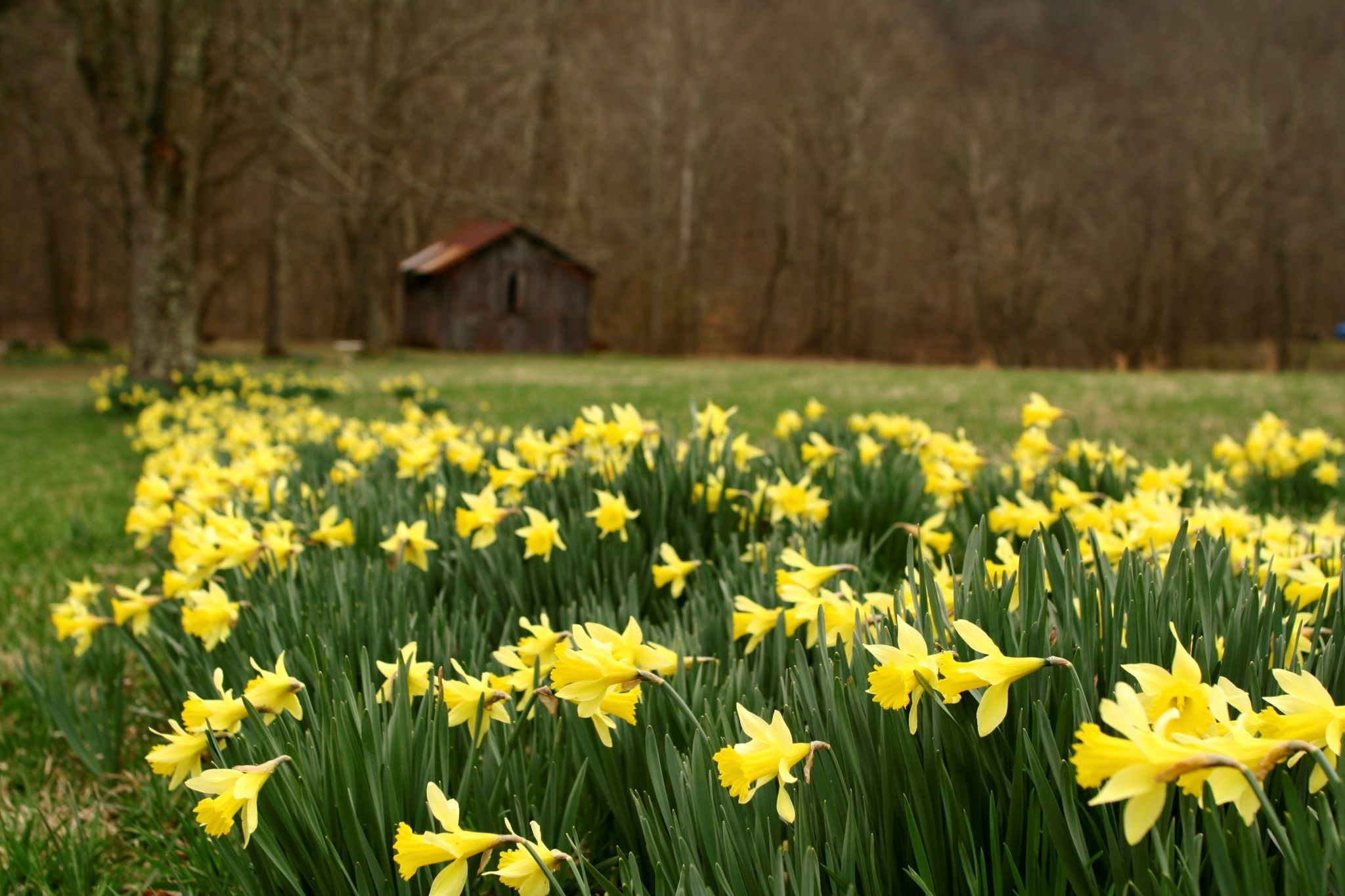 spring desktop backgrounds wallpaper | ololoshenka ...