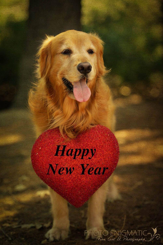 Happy New Year To All My Pinterest Followers Cuddly Animals Dog Love Golden Retriever