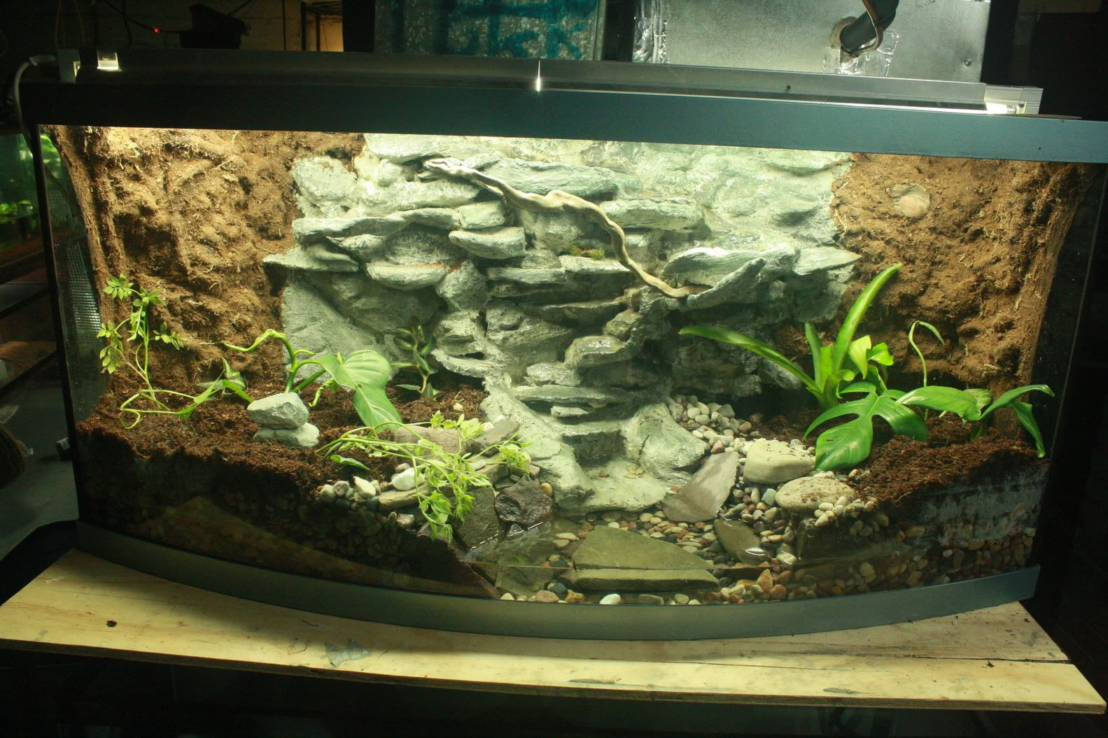 72 bowfront unplanted photo dart frog ideas for Amazon fish tanks